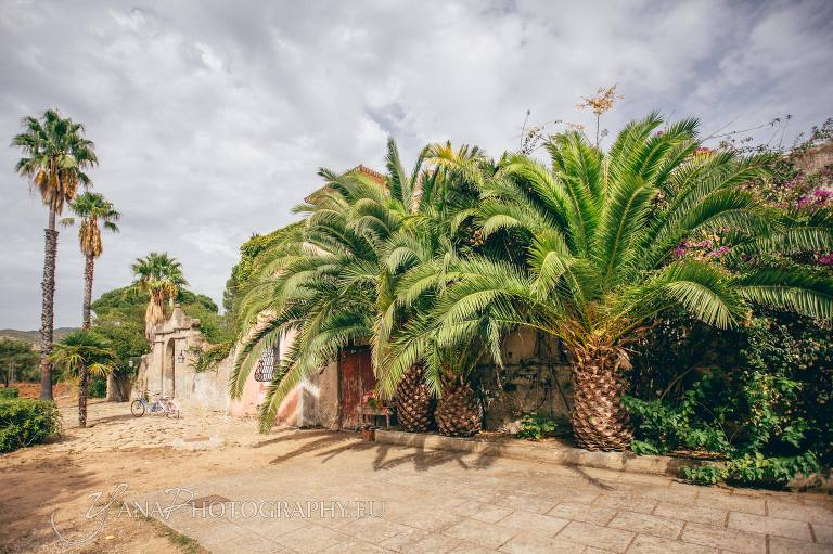 Palm trees at wedding venue